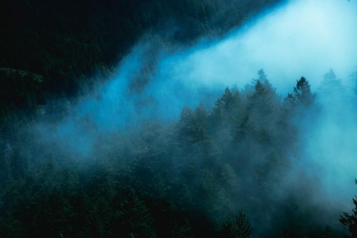 Trees swirl in mist