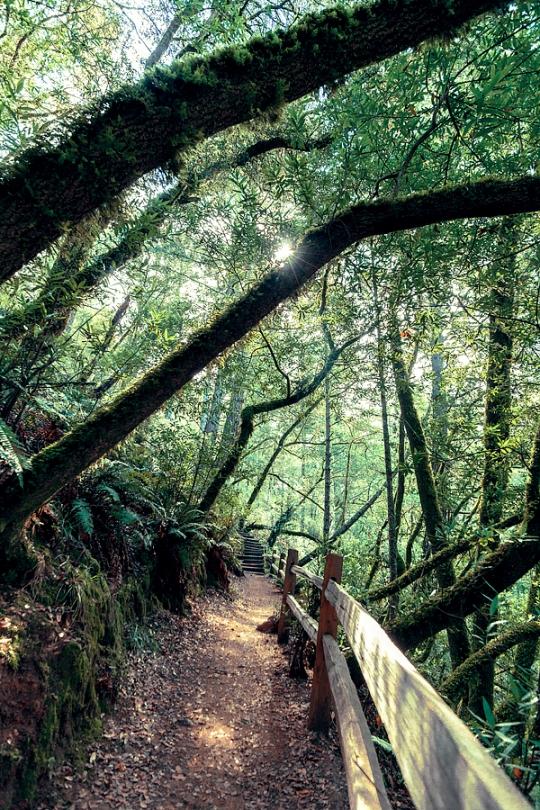 Dipsea Trail, Mt Tamalpais