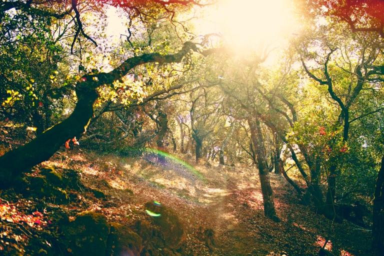 Skyline Trail, Napa, CA
