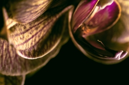 Orchids show hidden abstract beauty in close-up photos