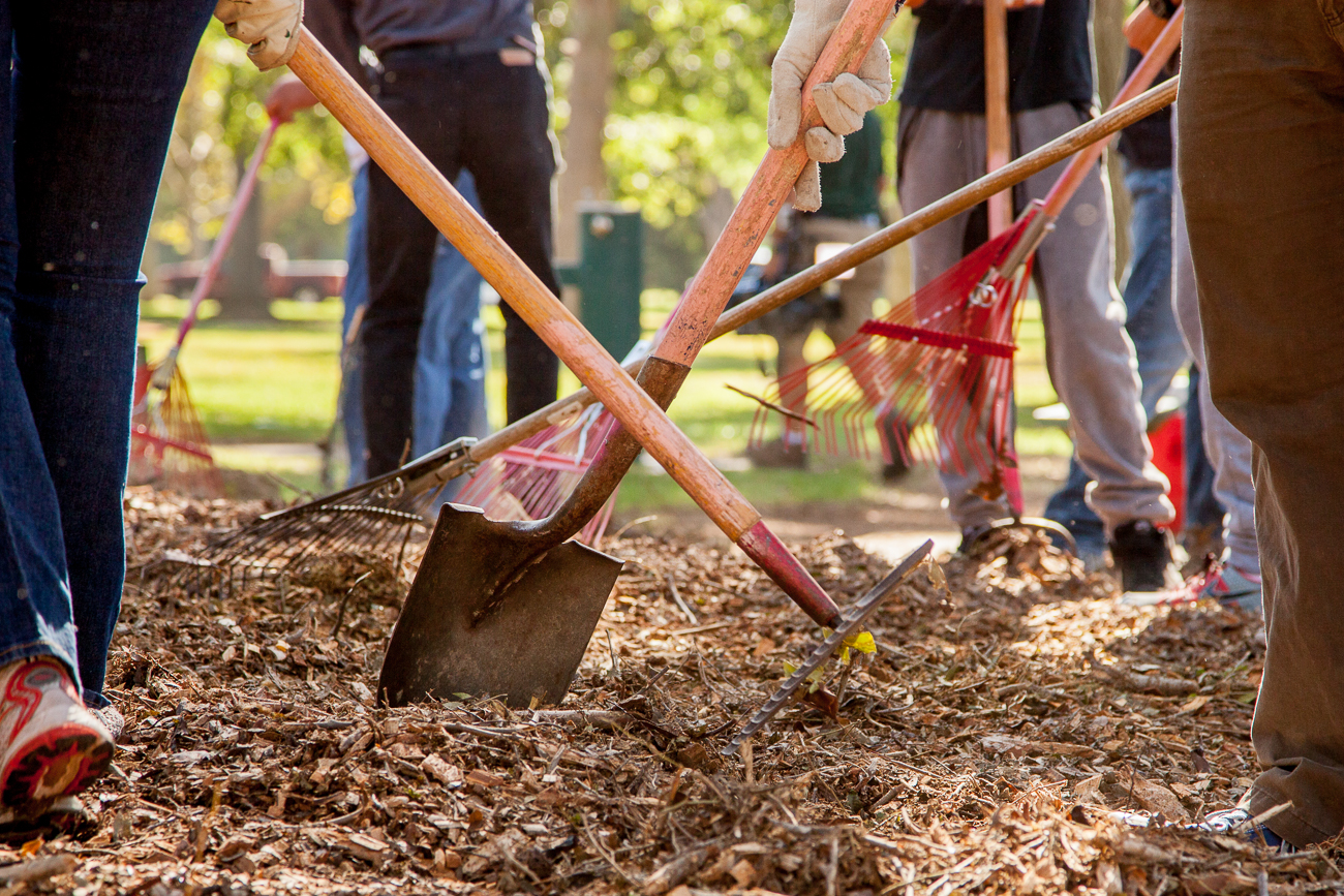 Volunteers unite to help the trees… with mulch power