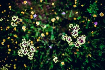 Skyline Wilderness Park, Napa, CA