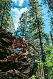 Big Trees, California
